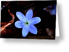 Wild Blue Greeting Card