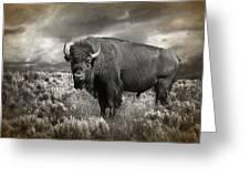 Wild Buffalo In Yellowstone Greeting Card