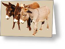 Wild Burro Buddies Greeting Card