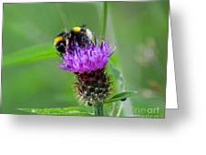 Wild Busy Worker Bumble Bee On A Thistle Flower Greeting Card