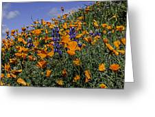 Wild California Poppies And Lupine Greeting Card
