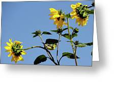Wild Canary Sunflowers Greeting Card