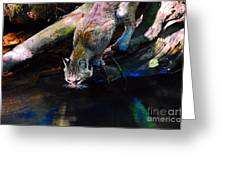 Wild Cat Drinking Greeting Card
