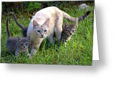 Wild Cats In Hialeah Greeting Card