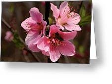 Wild Cherry Blossom Greeting Card