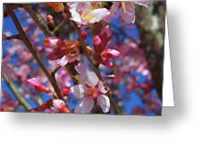Wild Cherry Tree In Bloom Greeting Card
