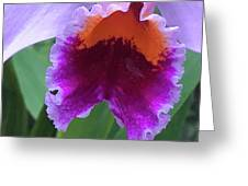 Wild Color Greeting Card