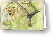 Wild Cougar Greeting Card