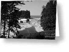 Wild Cove Greeting Card
