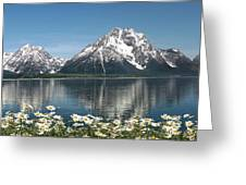 Wild Daisies In The Tetons Greeting Card