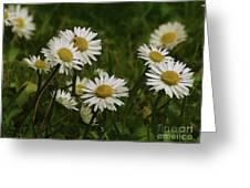 Wild Daisies Greeting Card