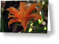 Wild Daylilies 1167 H_2 Greeting Card