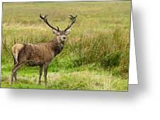 Wild Deer Animals   Greeting Card
