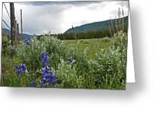 Wild Delphinium Greeting Card