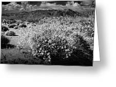 Wild Desert Flowers Blooming In Black And White In The Anza-borrego Desert State Park Greeting Card