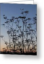 Wild Dill Silhouette Greeting Card