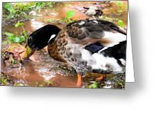 Wild Duck Mallard 1 Greeting Card