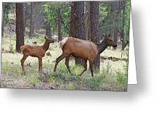 Wild Elk Baby And Mom Greeting Card