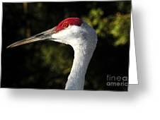Wild Eyed Greeting Card