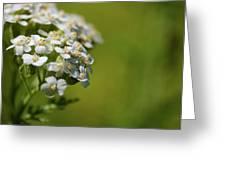 Wild Field Flowers Greeting Card