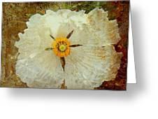 Ivory White Wildflower  Greeting Card
