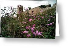Wild Flowers At The Old Fortress Greeting Card