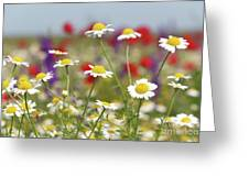 Wild Flowers Field Nature Spring Scene Greeting Card