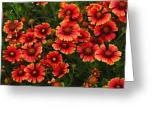 Wild Flowers In Field Color Art Print Greeting Card