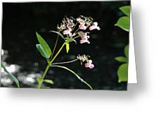 Wild Flowers Over Stream Greeting Card