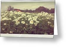 Wild Flowers Soft Greeting Card