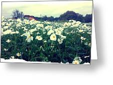 Wild Flowers White Greeting Card