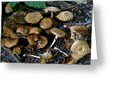 Wild Forest Mushroom Patch Greeting Card