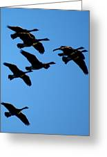 Wild Geese In The West Greeting Card