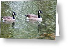 Wild Geese On A Lake 6 Greeting Card
