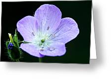 Wild Geranium 2 Greeting Card
