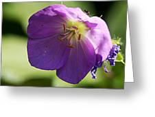Wild Geranium Greeting Card