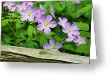 Wild Geraniums Greeting Card