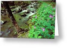 Wild Geraniums On Bradley Fork Greeting Card