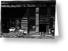 Wild Goats Ghost Town White Oaks New Mexico 1968 Greeting Card
