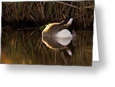 Wild Goose Greeting Card