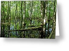 Wild Goose Woods Pond Greeting Card
