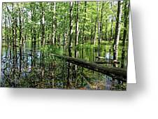Wild Goose Woods Pond II Greeting Card