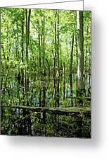Wild Goose Woods Pond Vii Greeting Card