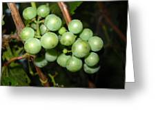 Wild Grapes In August Greeting Card