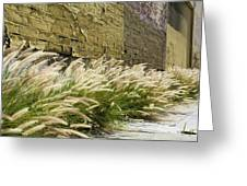 Wild Grass Along An Alley Wall Greeting Card