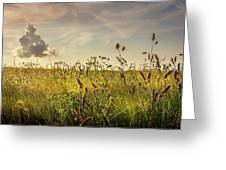 Wild Grass And A Lonely Cloud Greeting Card