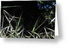 Wild Grass In The Sunlight Greeting Card