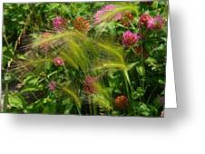 Wild Grasses And Red Clover Greeting Card