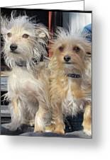 Wild Hair Dogs Greeting Card