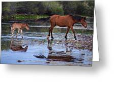 Wild Horse And Foal Cross Salt River Greeting Card